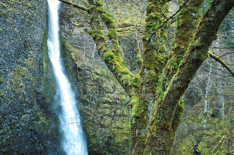 Natural Textures of the Pacific Northwest // JustineCelina.com