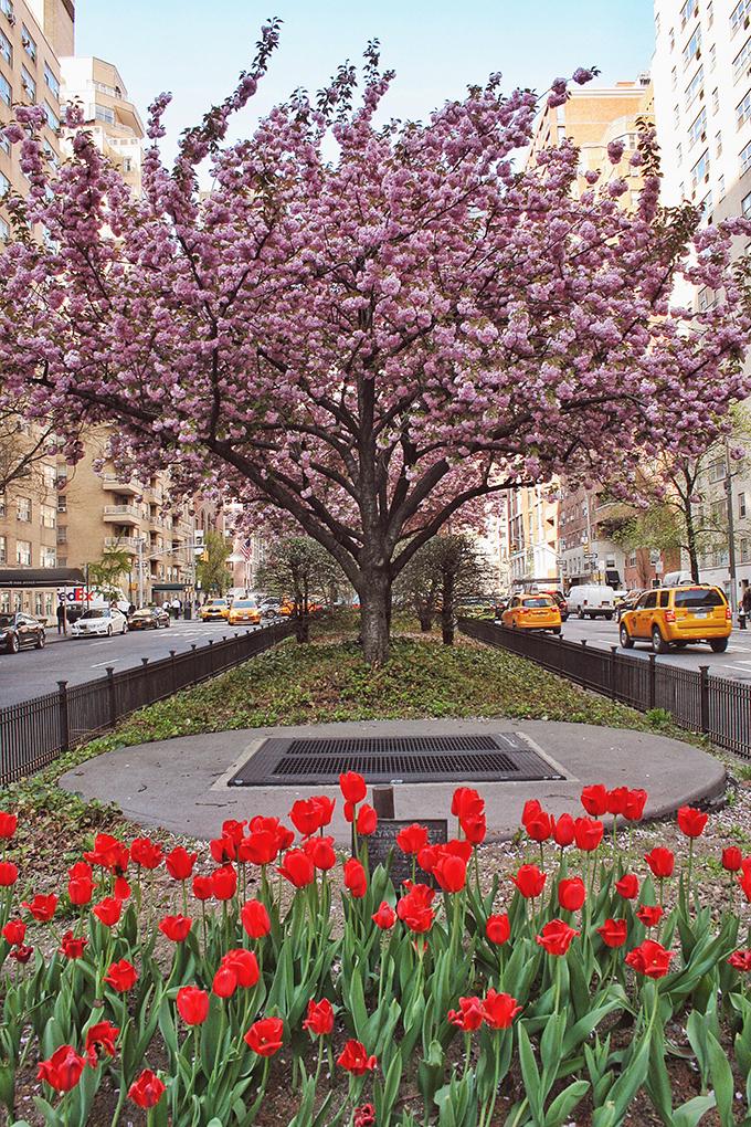 Snapshot | New York City | Park Avenue in Bloom // JustineCelina.com