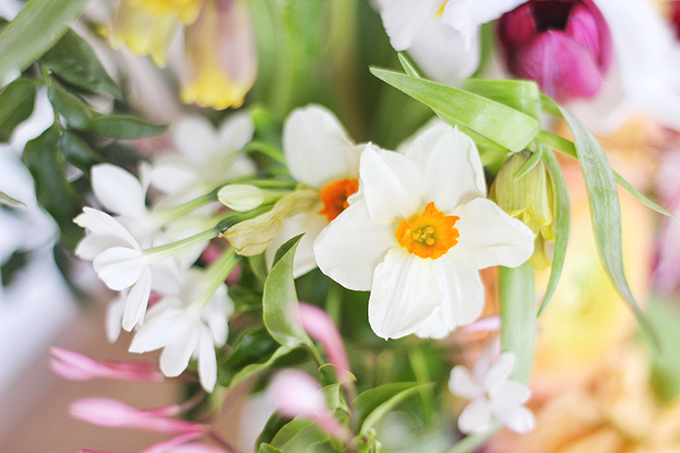 An Introduction to Spring Flowers   Narcissus // JustineCelina.com