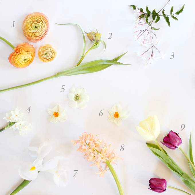 An Introduction to Spring Flowers   How to Identify Spring Flowers // JustineCelina.com