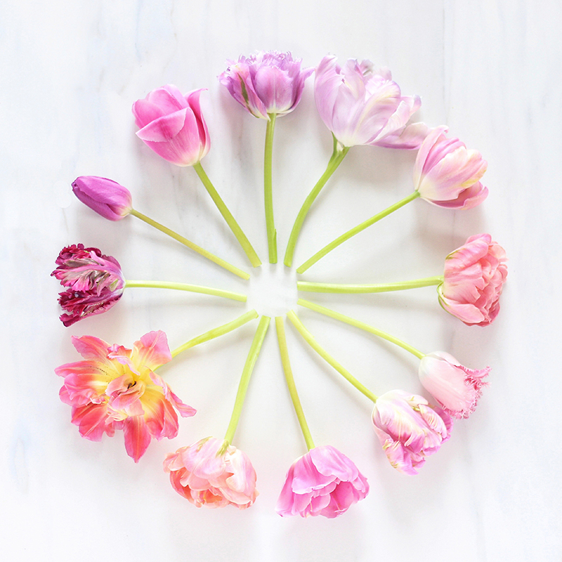 Digital Blooms | May 2016 Free Desktop Wallpaper // JustineCelina.com