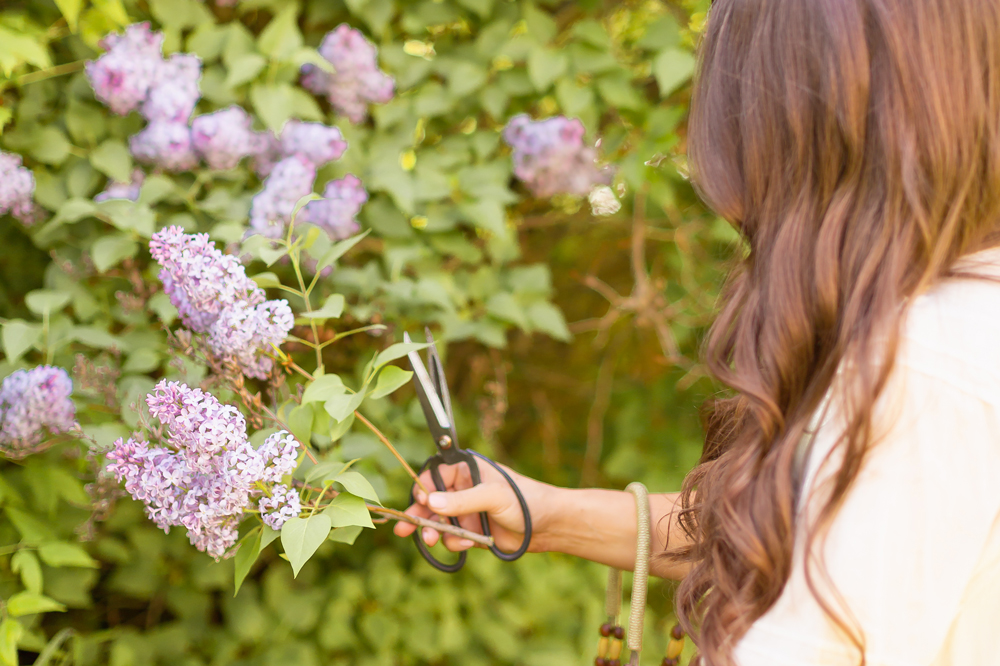 Brunette cutting lilacs from a large tree in a flowy linen dress | DIY Lilac Flower Arrangement | How to Forage Lilacs | How to Cut Lilacs from Bush or Tree | How to Prolong Lilac Vase Life | How to Arrange Lilacs | Fresh Lilac Flower Bouquet | Extremely Pretty Lilac Arrangement | Purple Lilac Arrangement | How to Cut Lilacs from a tree or bush | Calgary Creative Lifestyle Blogger // JustineCelina.com