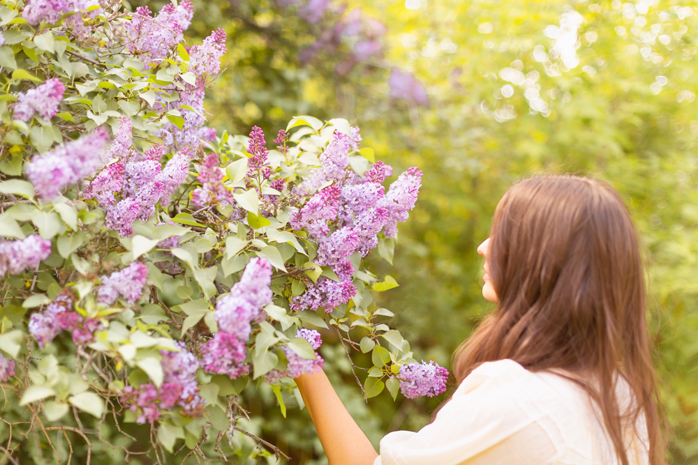 Smiling brunette woman foraging lilac blossoms from a large tree | DIY Lilac Flower Arrangement | How to Forage Lilacs | How to Cut Lilacs from Bush or Tree | How to Prolong Lilac Vase Life | How to Arrange Lilacs | Fresh Lilac Flower Bouquet | Extremely Pretty Lilac Arrangement | Purple Lilac Arrangement | How to Cut Lilacs from a tree or bush | Calgary Creative Lifestyle Blogger // JustineCelina.com
