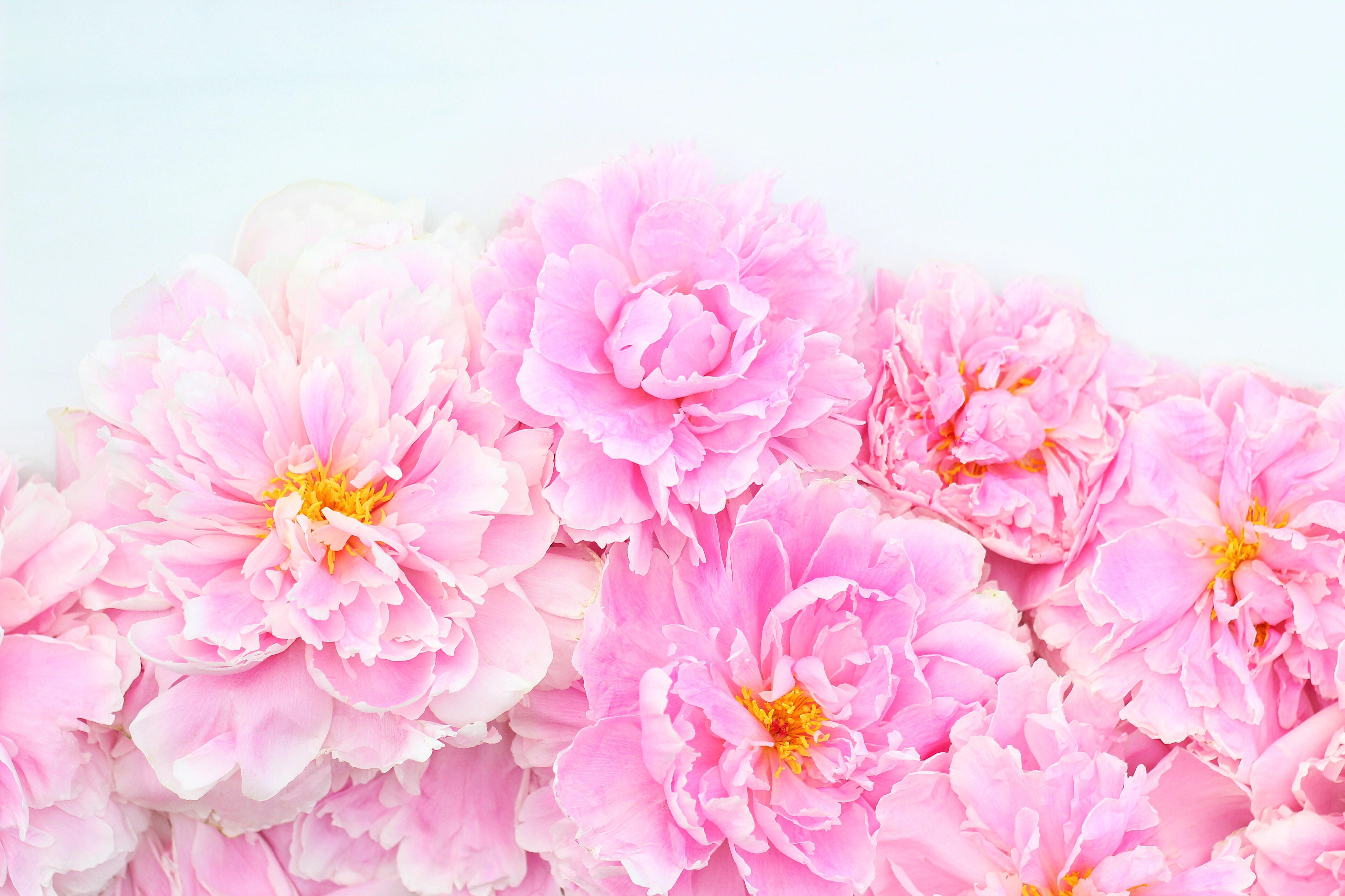 Digital Blooms Desktop Wallpaper 2 | July 2016 // JustineCelina.com x Rebecca Dawn Design