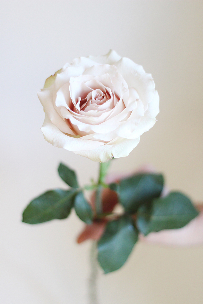 All About Roses | A Single Quicksand Rose // JustineCelina.com x Rebecca Dawn Design