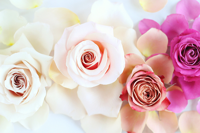 All About Roses | Romantic Rose Ombre // JustineCelina.com x Rebecca Dawn Design