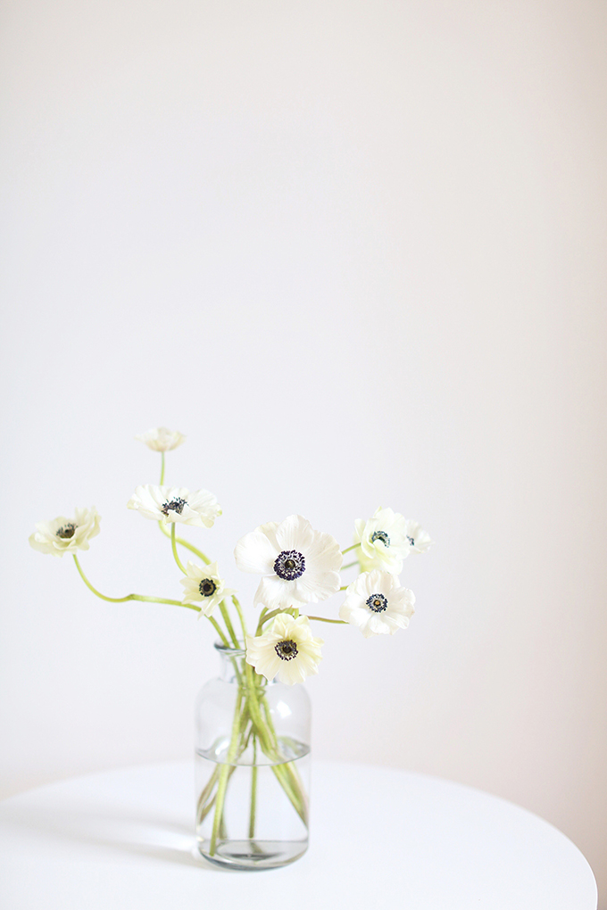 All About Anemones | The Best Anemones Care Tips | Panda Anemones // JustineCelina.com