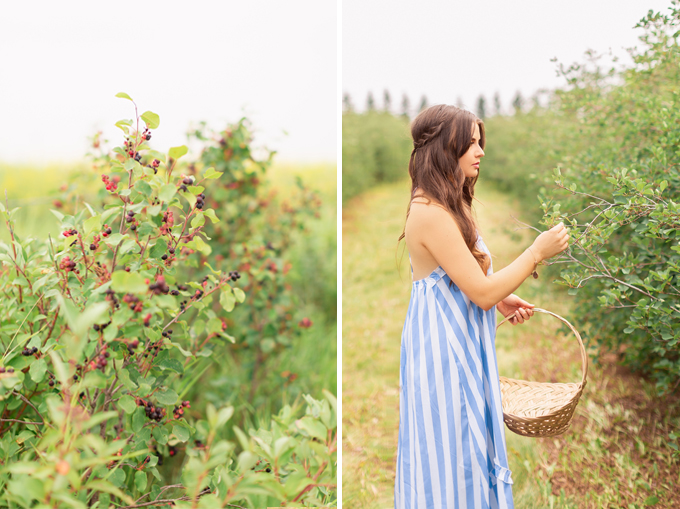 Foraging for wild Saskatoons in Foothills, Alberta | Calgary Food & Lifestyle Blogger // JustineCelina.com