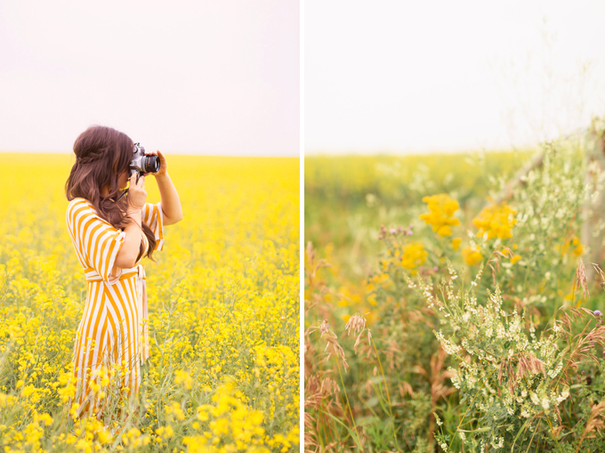 Pattern Play | Stripes | How to Style Stripes for Summer 2018 | The Best Striped Dresses 2018 | Mustard Striped Button Down Dress | Woman in a field of Canola with a Canon Film Camera | Foothills, Alberts | Calgary Fashion Blogger | Canadian Fashion Blogger // JustineCelina.com