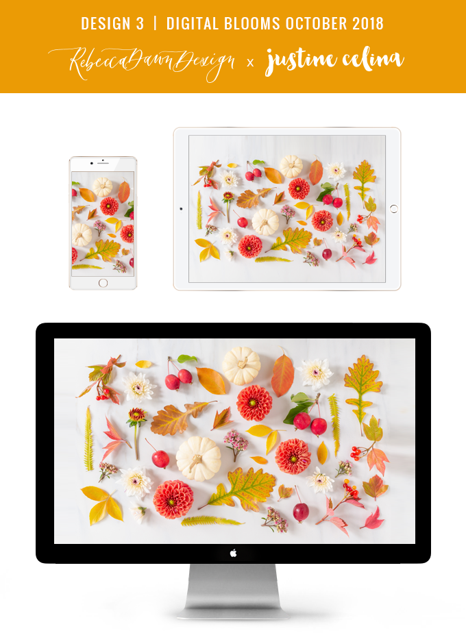 Digital Blooms October 2018 | Free Desktop Wallpapers for Fall with Dahlias, Sedum, Chrysanthemum Poms, Ornamental White Pumpkins, Crabapples and an array of foraged autumn leaves and berries | Pantone Fall / Winter 2018 Free Tech Wallpapers | Design 3 // JustineCelina.com x Rebecca Dawn Design