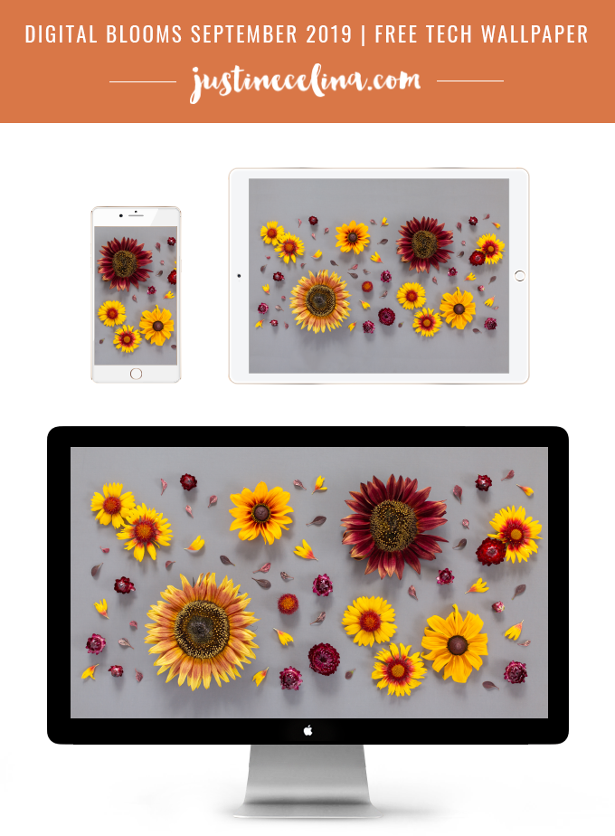 DIGITAL BLOOMS SEPTEMBER 2019 | FREE DESKTOP WALLPAPER | Free Summer / Fall 2019 Floral Desktop Wallpapers featuring Chianti and Little Becka Sunflowers, Rudbeckia,Strawflower, wild Firewheels and Barberry leaves on a moody grey background | Free Sunflower Floral Wallpapers for Summer and Autumn | Summer / Fall 2019 Tech Wallpapers | FREE Autumn Floral Wallpapers | The Best FREE Fall/Autumn Tech Wallpapers | Free Floral Tech Wallpapers Fall 2019 // JustineCelina.com