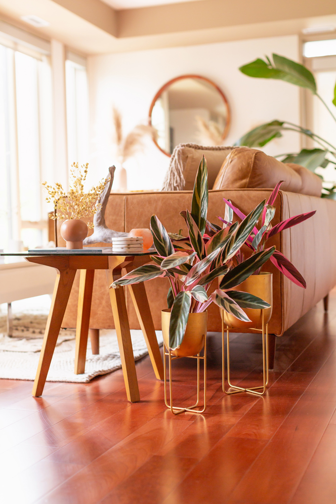 How to Transition Your Decor Into Fall | Easy and inexpensive fall decorating ideas | JustineCelina's Inner City Calgary bohemian, mid-century modern apartment | A Bohemian, Mid-Century Modern Living Room featuring Dried Arrangements and Stromanthe Sanguinea | Fall Decor 2019 Trends | Bohemian, Mid Century Modern Fall Decor | Pantone Fall Winter 2019 / 2020 Interior Design Trends | Fall Decorating DIY | Calgary Lifestyle, Interior Design and Home Decor Blogger // JustineCelina.co