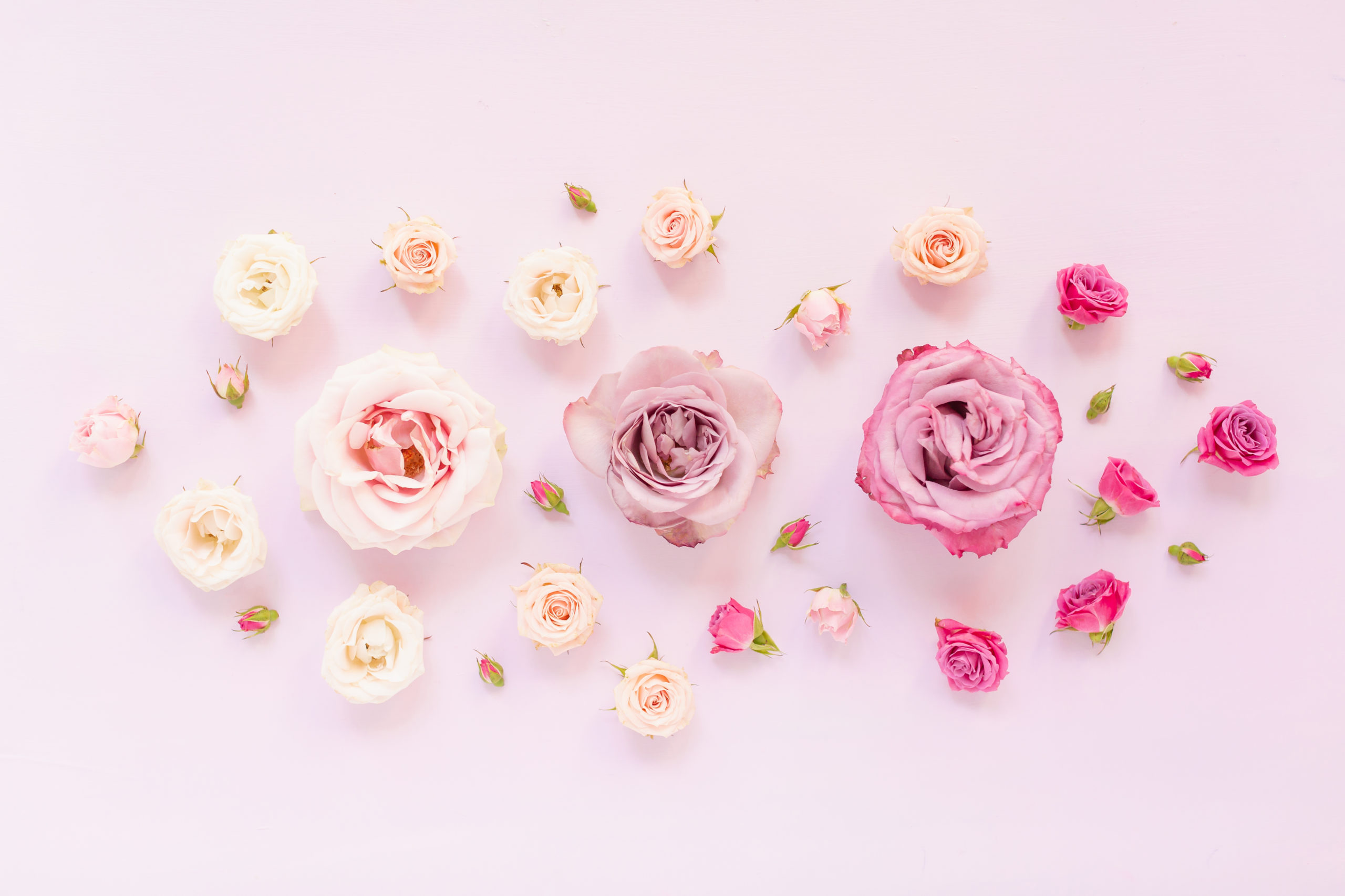 DIGITAL BLOOMS MARCH 2020 | FREE DESKTOP WALLPAPER | A soft, feminine, pastel rose FREE Desktop Wallpaper for Spring 2020 | Pink and Lavender Floral Tech Wallpaper for Spring | Pastel Pink FREE tech wallpaper Spring 2020 | Free March Flower Tech Wallpapers | JustineCelina Spring 2020 Digital Blooms | Free March 2020 Floral Desktop Wallpaper featuring Purple Haze Lavender Roses, Amnesia Lavender Novelty Roses, Mother of Pearl Roses and Spray Roses // JustineCelina.com