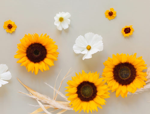 DIGITAL BLOOMS SEPTEMBER 2020 | FREE DESKTOP WALLPAPER | Free Summer / Fall 2020 Floral Desktop Wallpapers featuring Sunflowers, white Garden Cosmos, Golden Tickseed, Pampas Grass and Whiskey Grass on a sage green background | Free Sunflower Floral Wallpapers for Summer and Autumn | Summer / Fall 2020 Tech Wallpapers | FREE Autumn Floral Wallpapers | The Best FREE Fall/Autumn Tech Wallpapers | Free Floral Tech Wallpapers Fall 2020 // JustineCelina.com